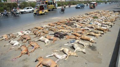 Photo of Karachi Witnesses Alarming Rise In Rabies Cases